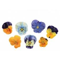 Fresh Origins Crystallized Viola