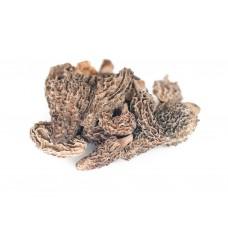 Dried Morel Mushrooms Mount Hope, 8oz bag #MHWDM8